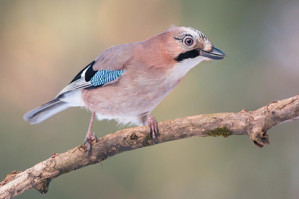 фото и название птиц в украине можно органично