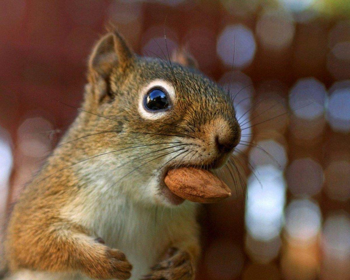 смешные белки с орехами фото всегда