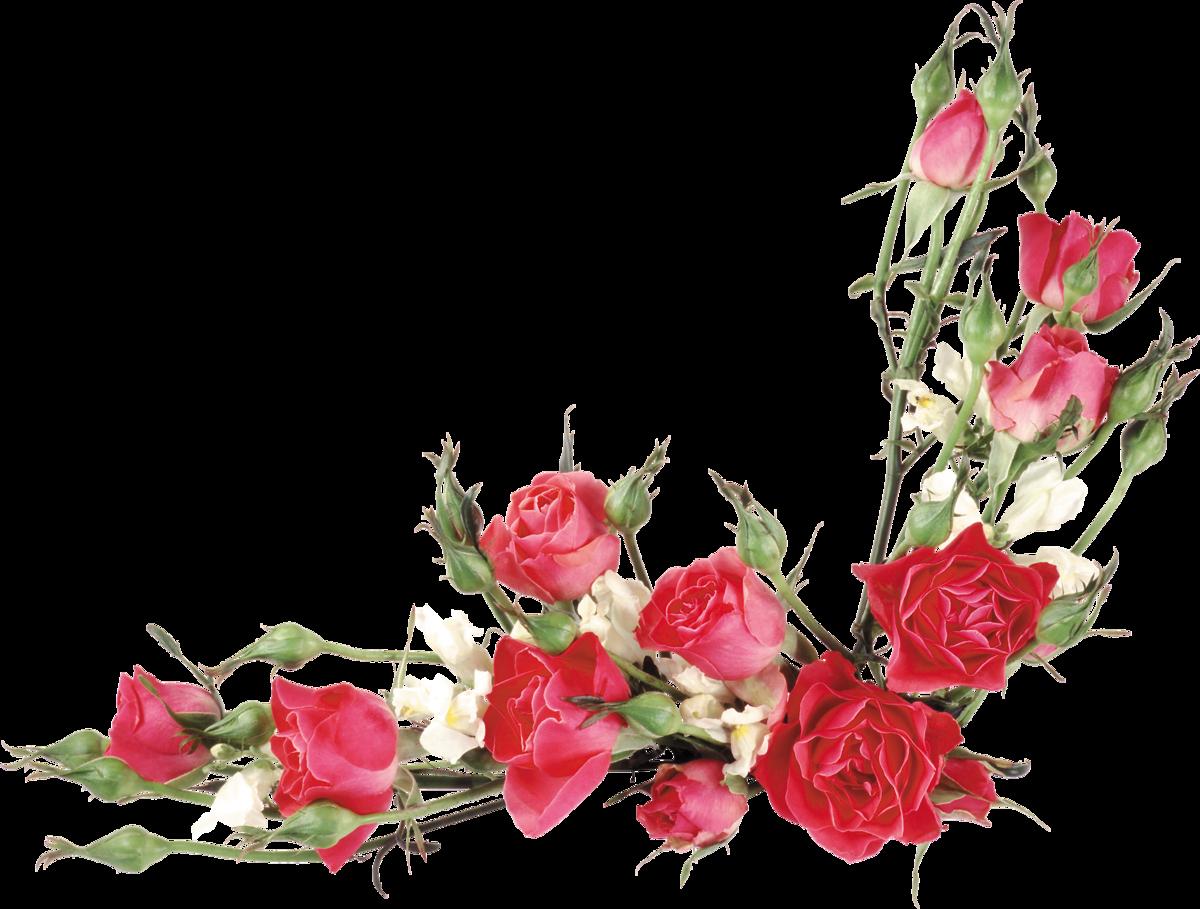 Цветочки для оформления открыток, картинки козявки