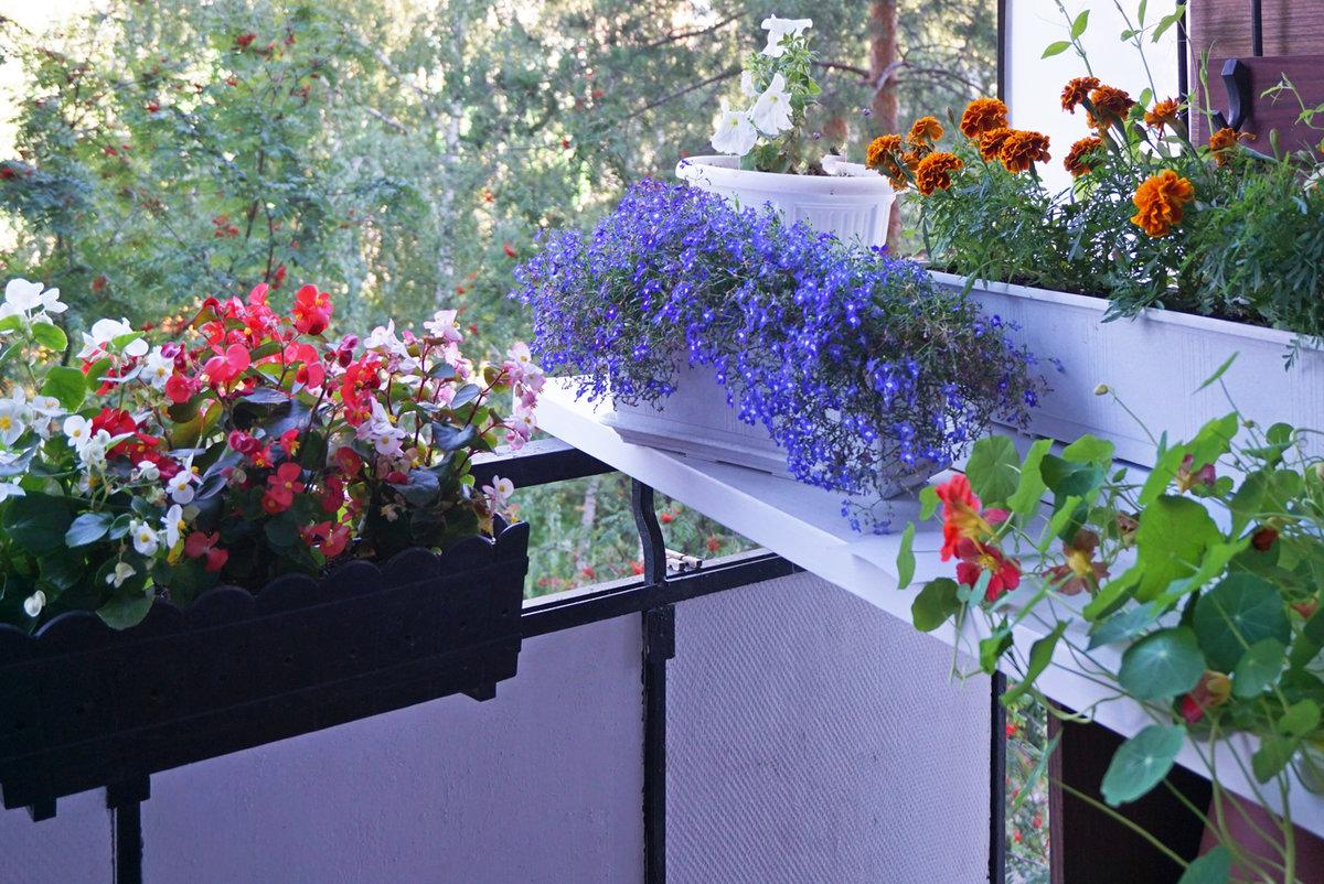 так красиво на балконе разместить цветы фото прошлые сезоны модницы