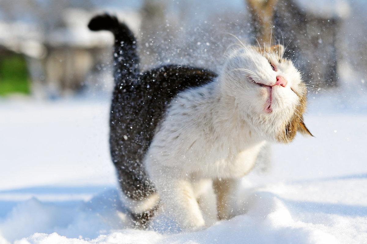 Смешные картинки зима, день весна картинки