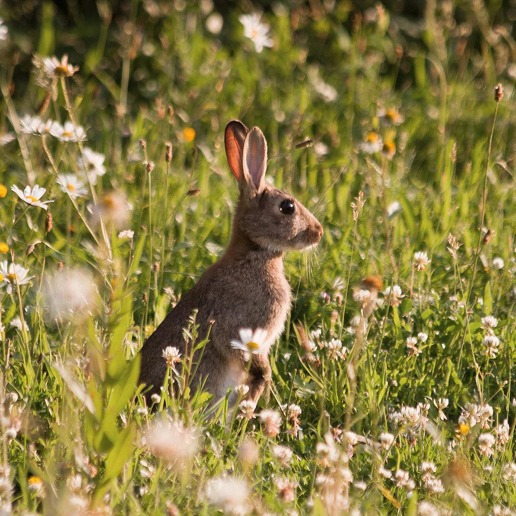 Картинки заяц на лугу