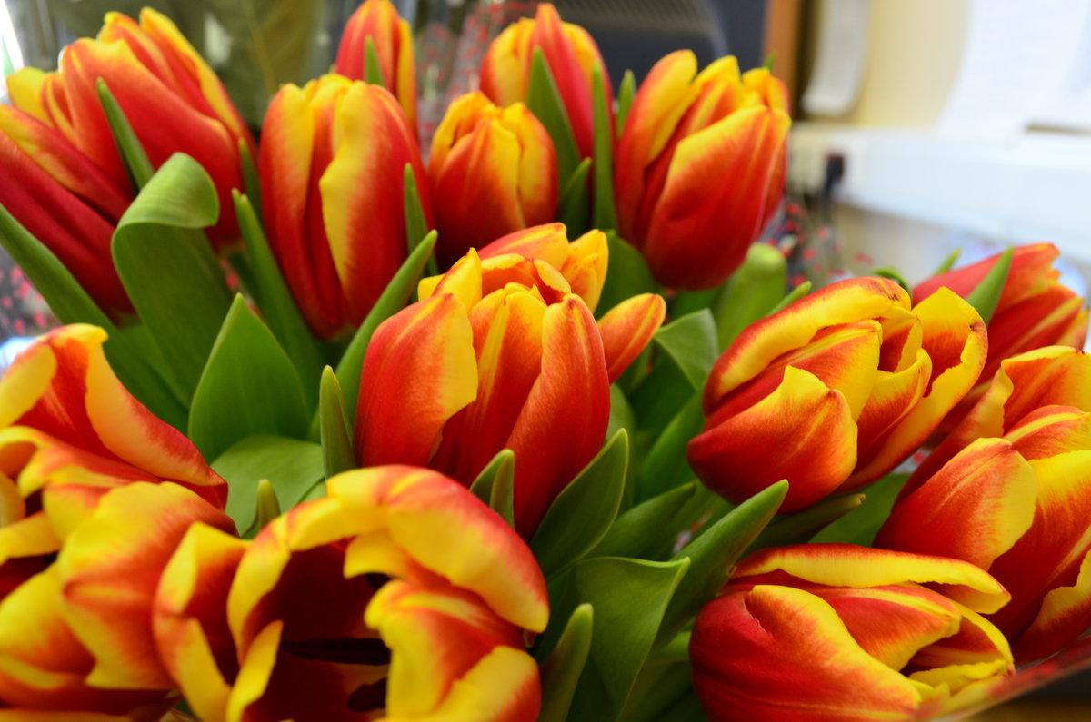 Картинки тюльпаны желто красные в букете