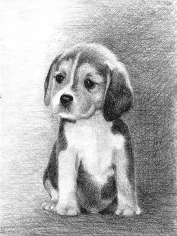 Стихами юбилеем, картинки животные нарисованные простым карандашом