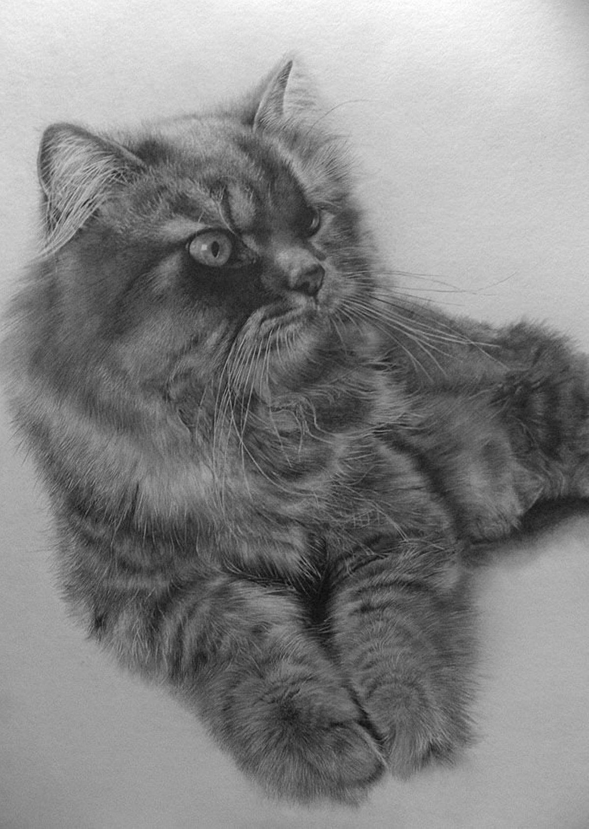 Фото кошек рисунки карандашом