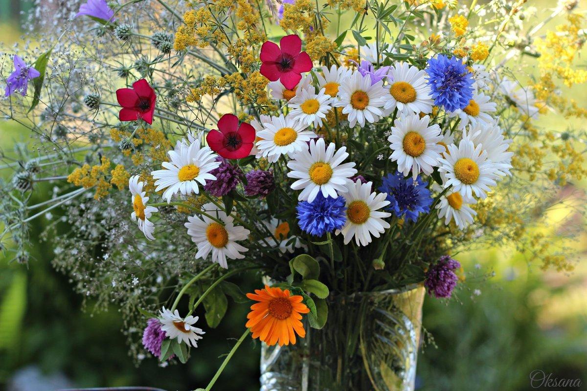 Своими руками, полевые цветы открытки красивые