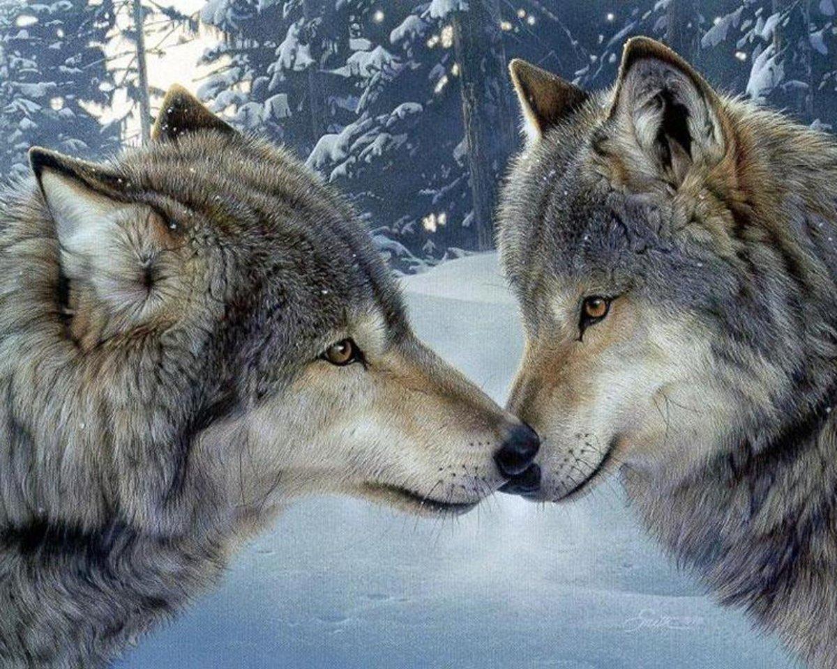 Волки открытки, оля благодарю дашу