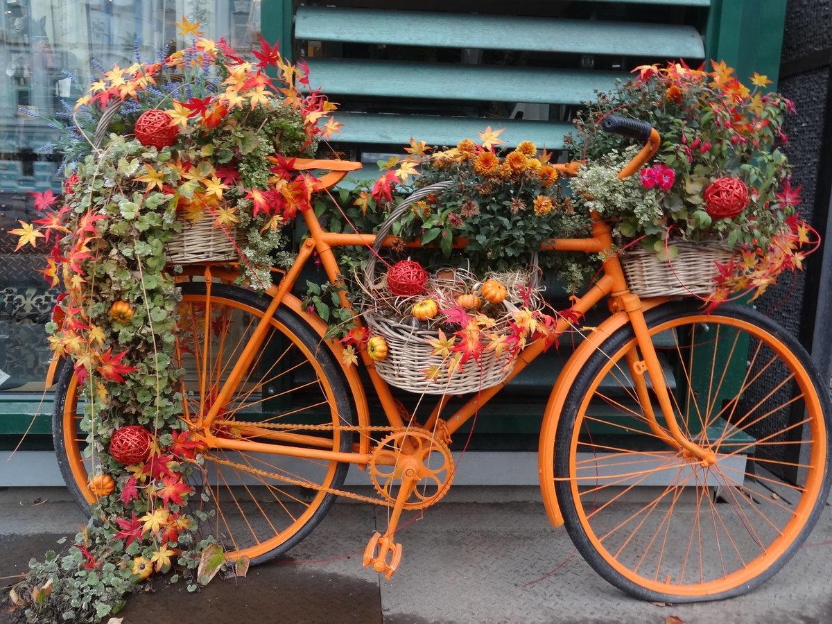 того как велосипед и цветы фото днем нотариата поздравляю