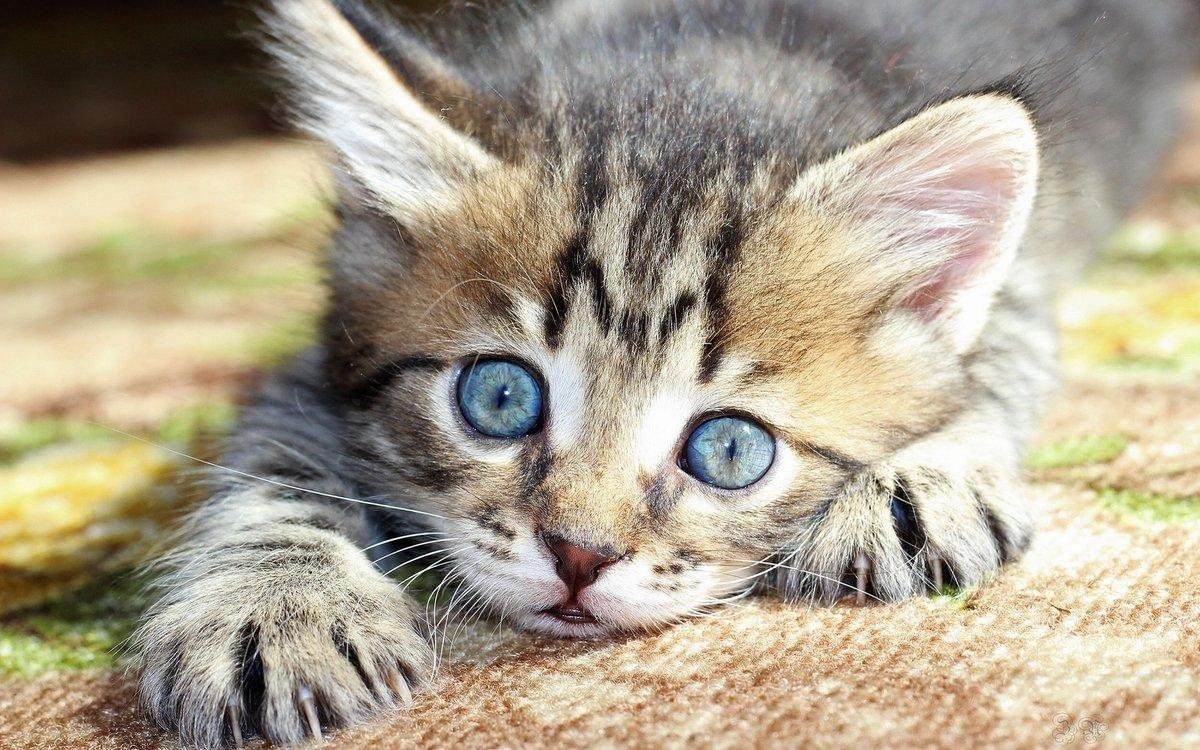 Картинки с котятами фото