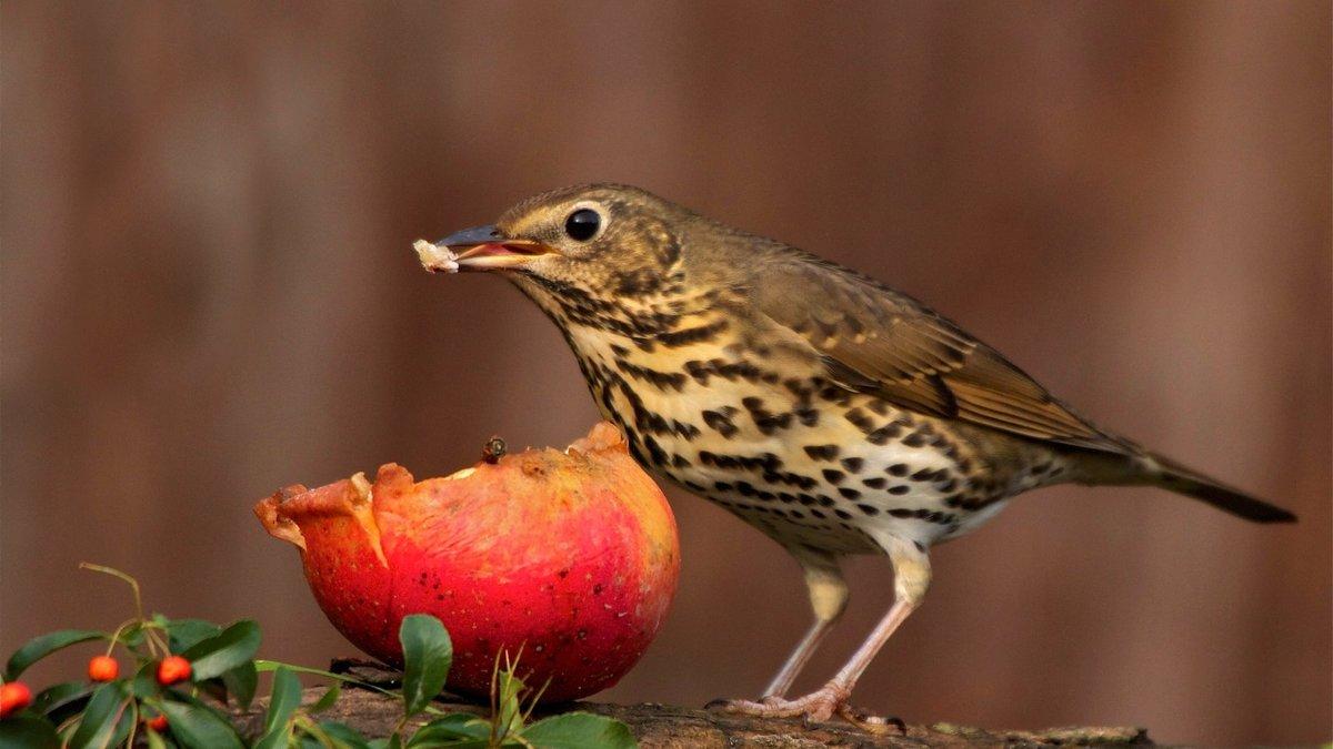 птицы которые кушают вишню возвращении майнкрафт заметите