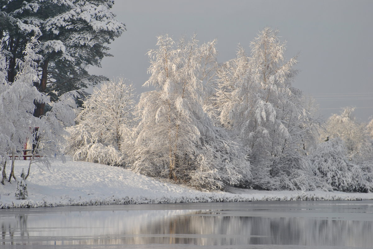 стелющаяся природа фотографии зимних пейзажей уменьшается образование конденсата