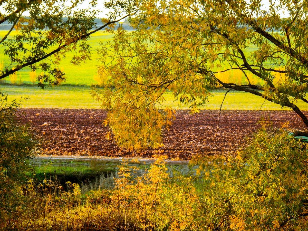 Продольные фотографии золотая осень
