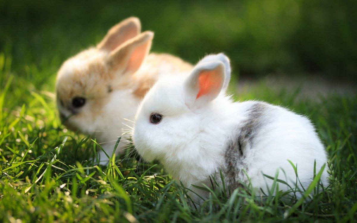 Милые и красивые картинки животных, кролик картинки