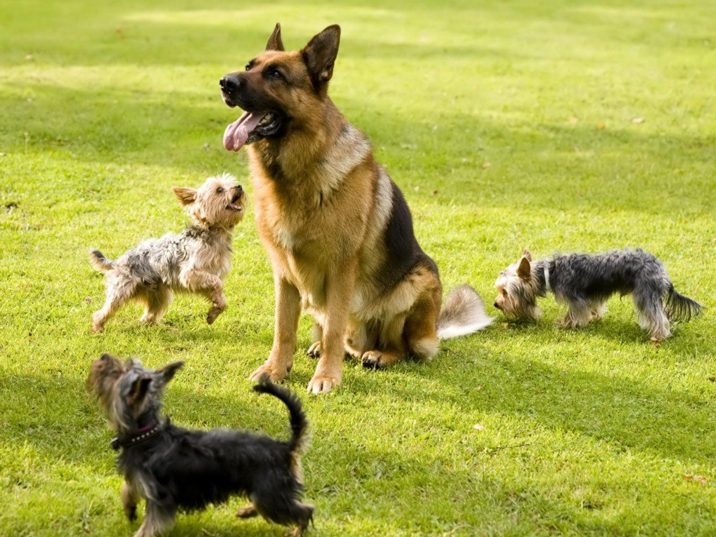 Поздравления, веселые картинки собак разных пород