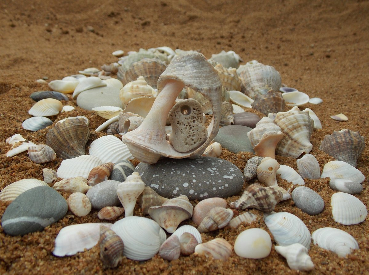 объекты недвижимости картинки из ракушек на песке днём матери