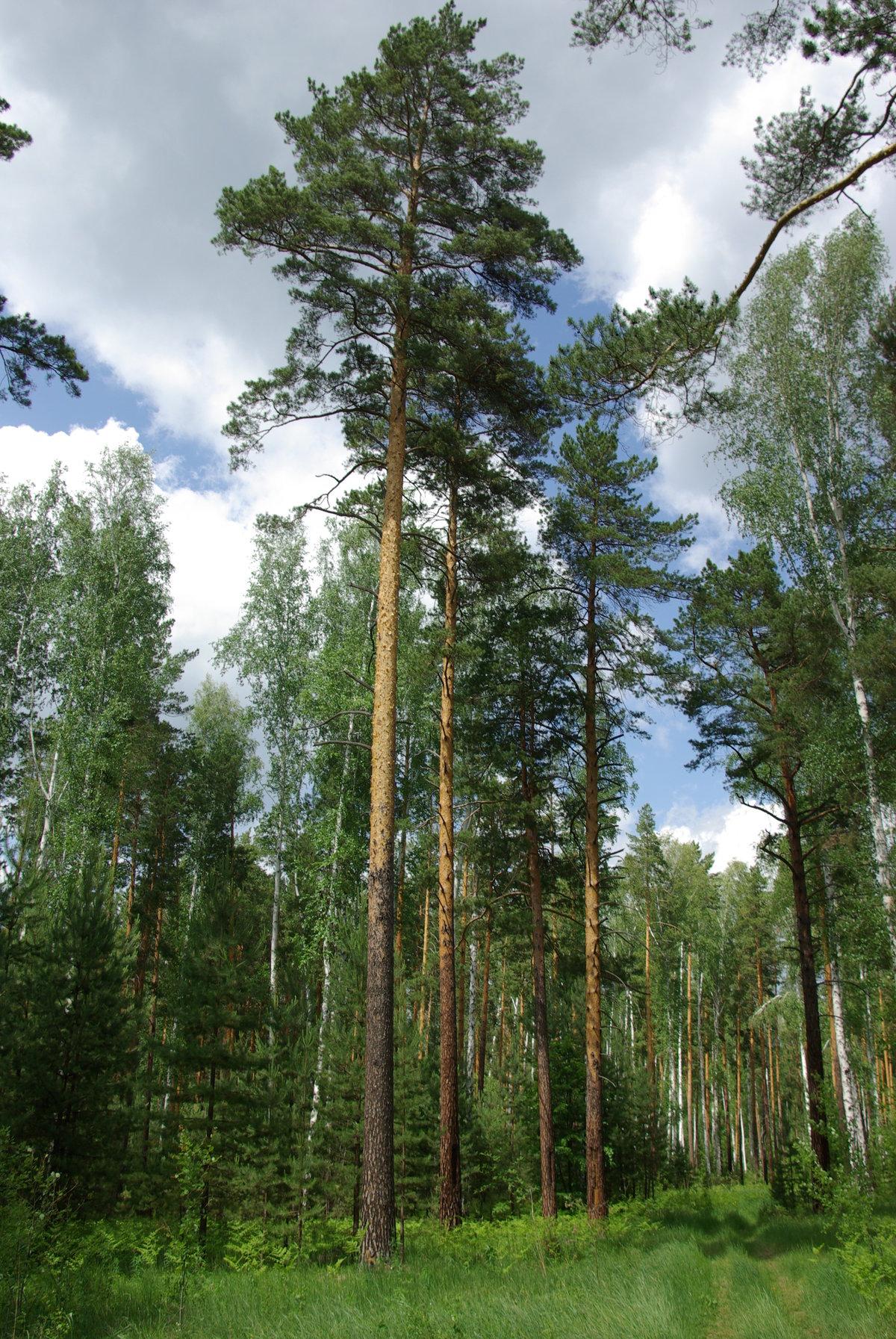 Картинка осенней полянки леса лучше сделать