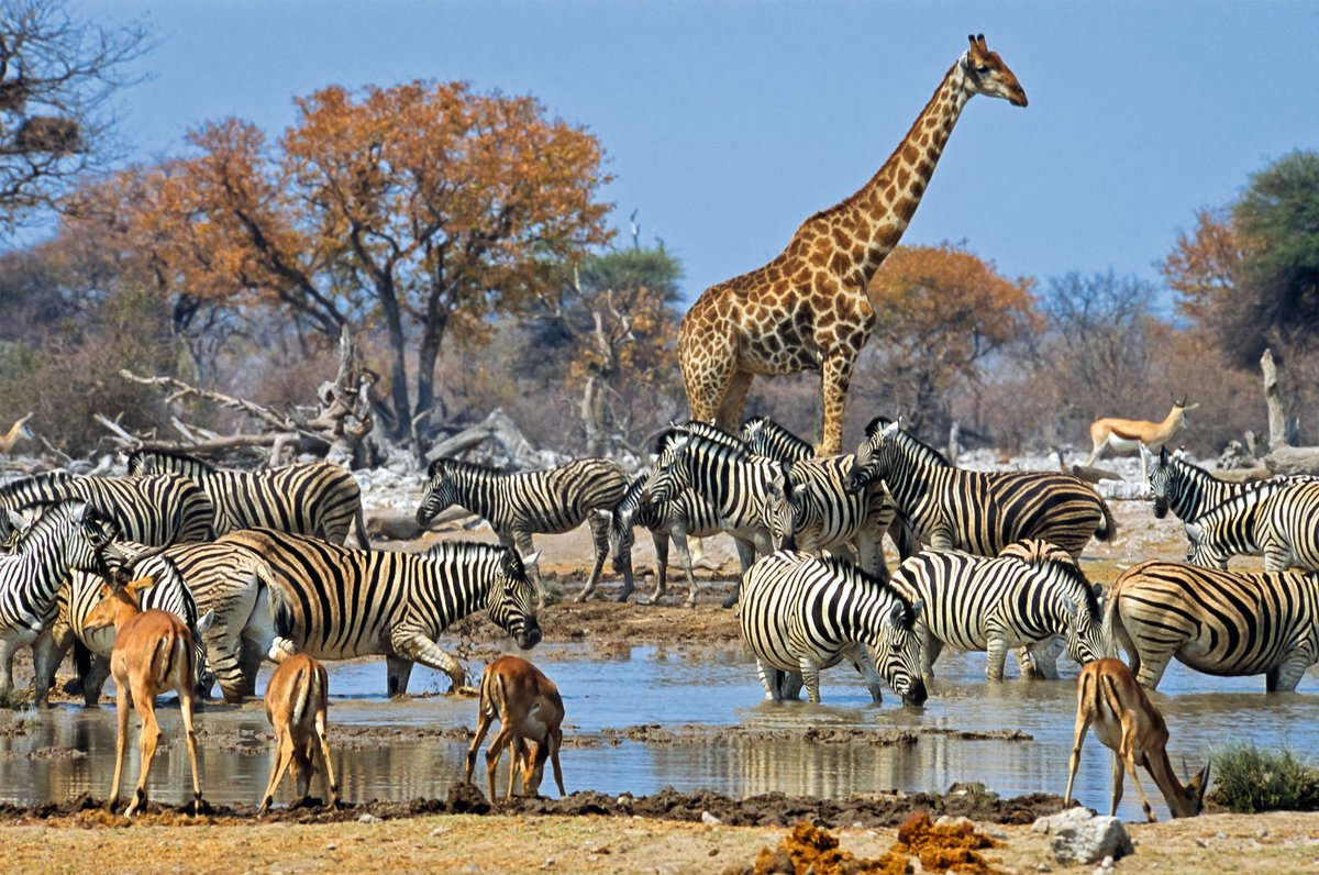 Животный мир в африке картинки