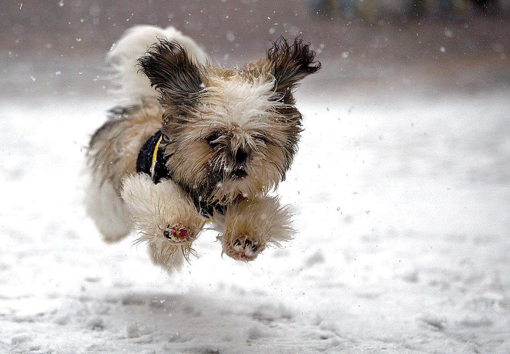 Прикольные картинки коты собачки зима снег, своими руками