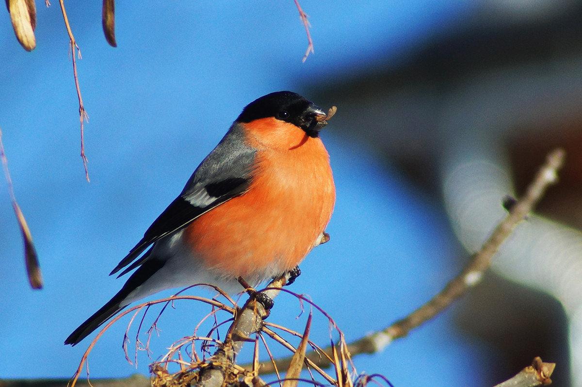 картинки птиц года ней наши