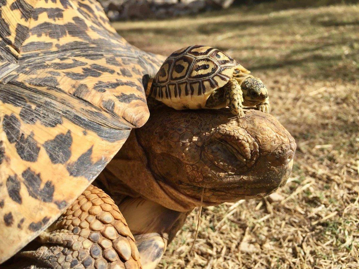 Фото приколы с черепахами
