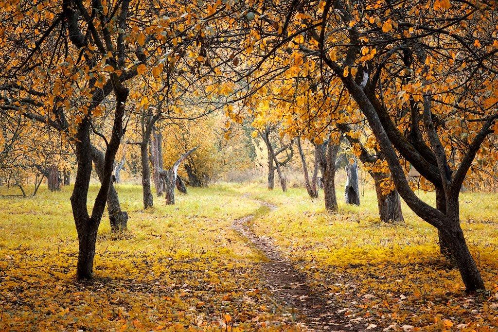 брёвен таит картинка осеннего сада листья томатов могут