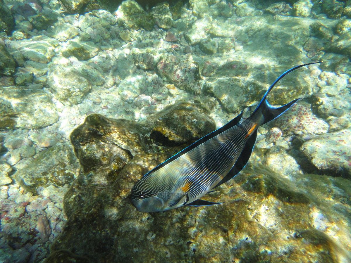 В хургаде близко к берегу коралловые рифы с рыбами?