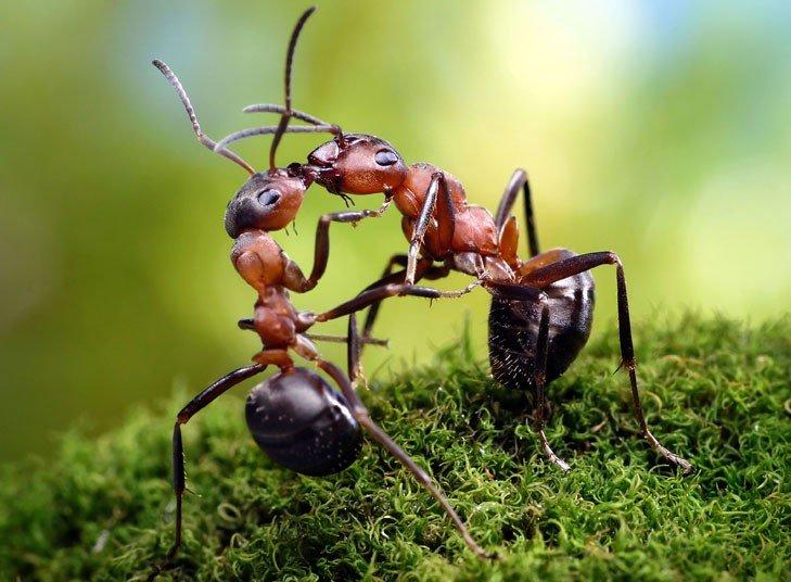 Днем, прикольный муравей картинки