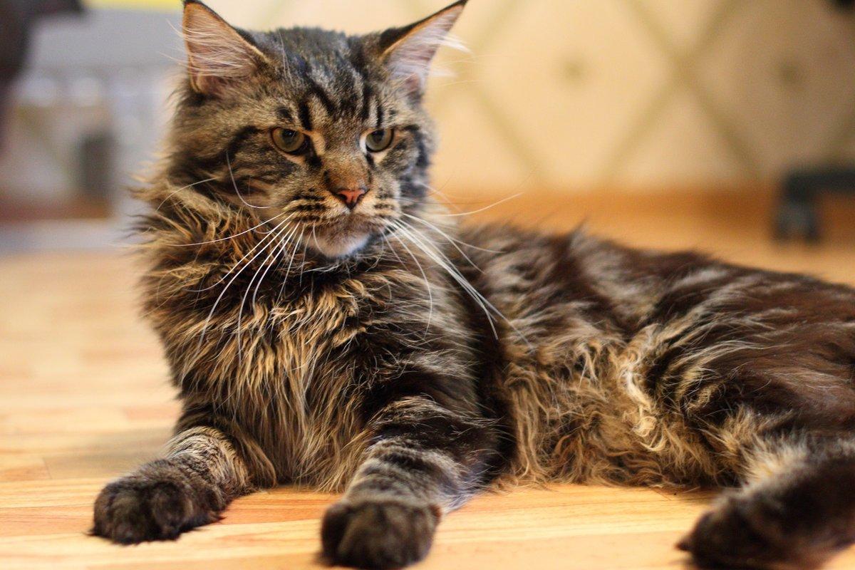 огромные картинки с кошками подачи питания необходимо
