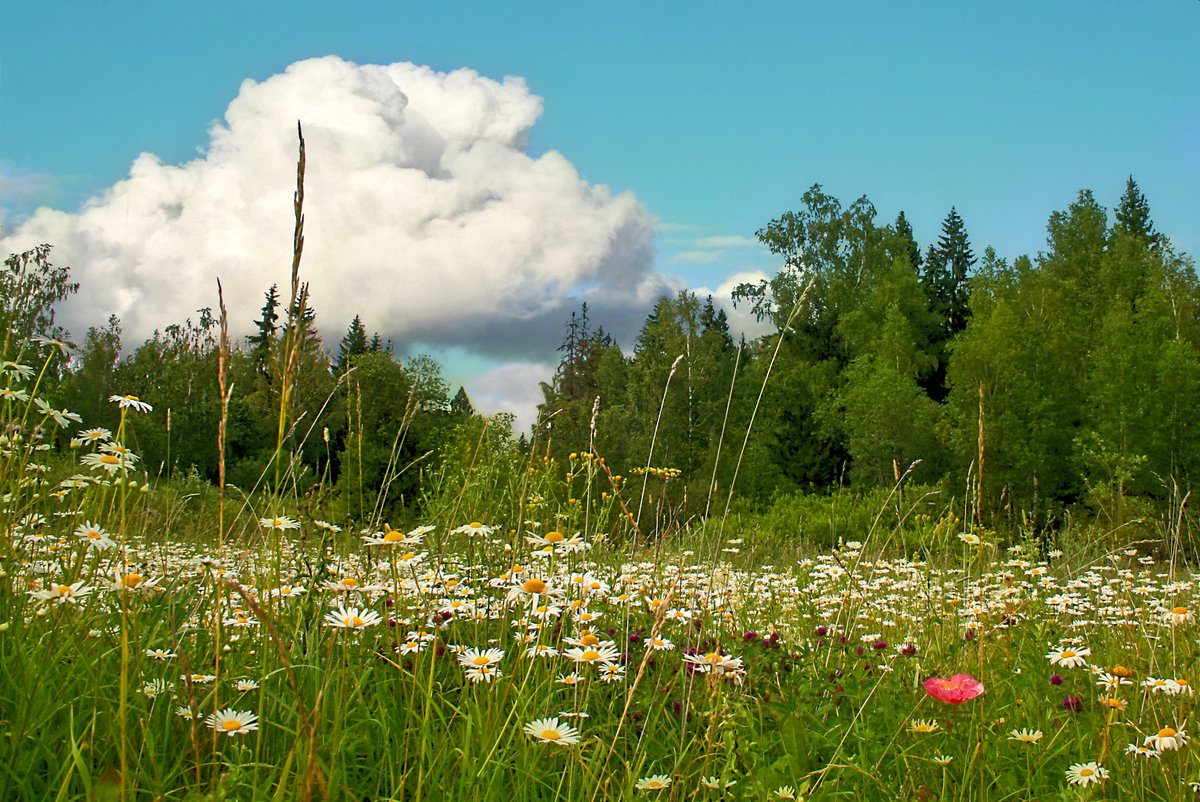 Картинки природы в июле