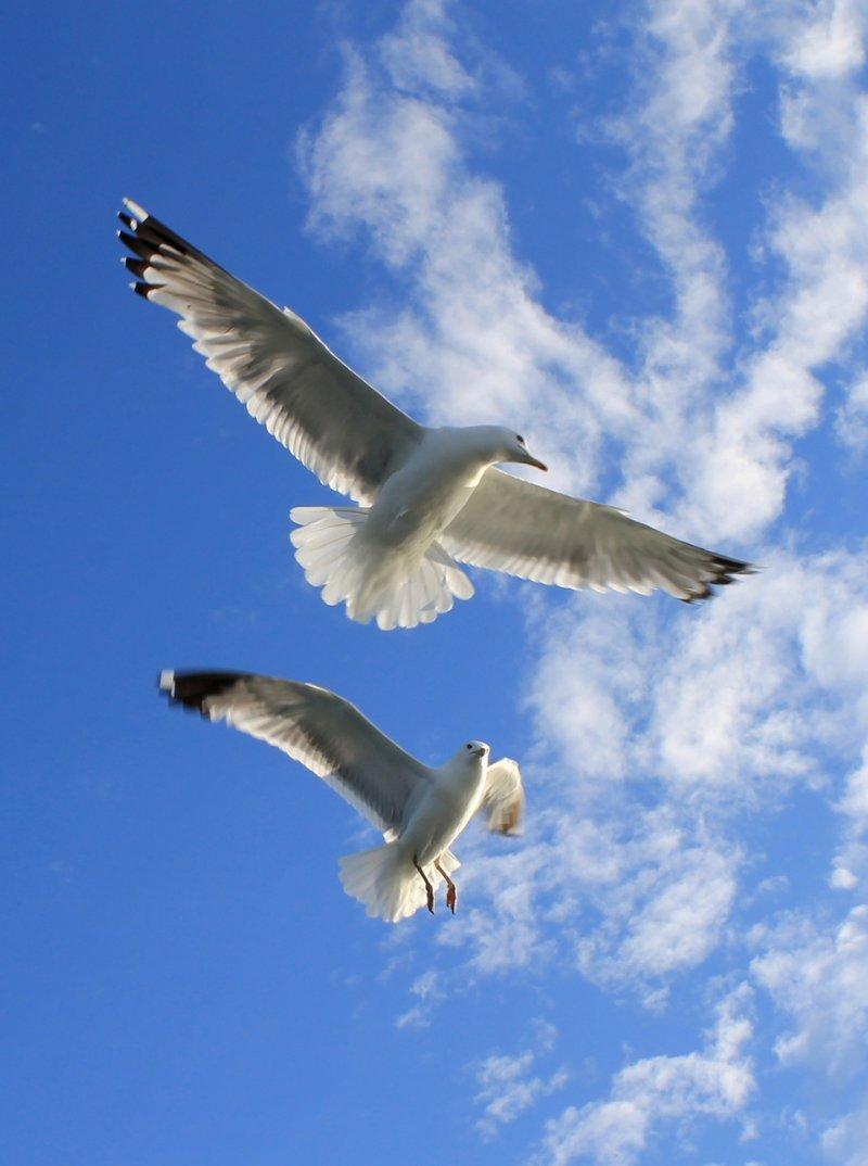 был картинки белая птица в небе нашем сайте указаны