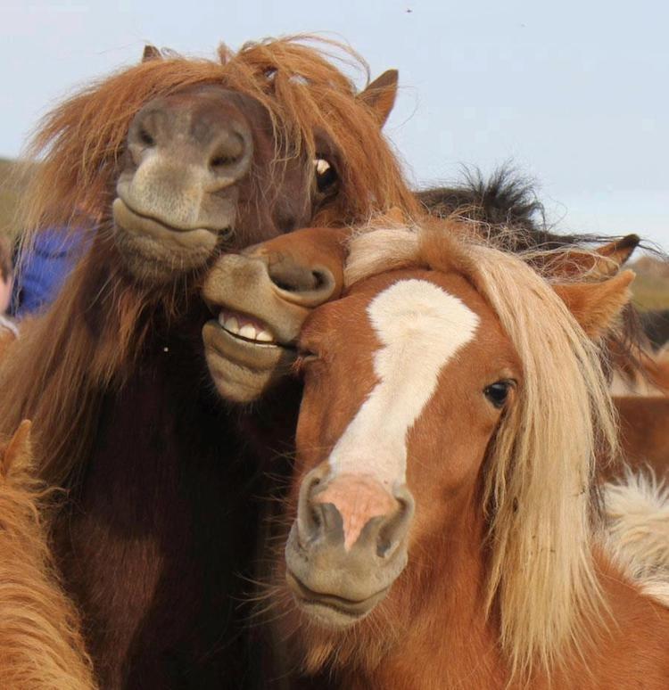 Прикольные картинки про лошадь