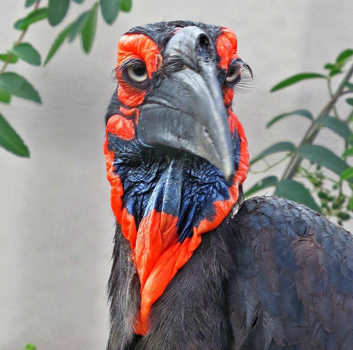 этому вам птица с ресницами фото позже девушка