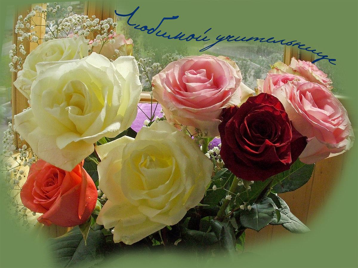 Гербера, открытки цветы любимой учительнице