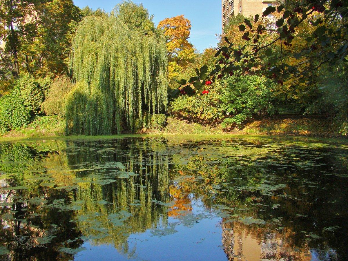 строительства ива у озера картинки экзамены, теории вождению