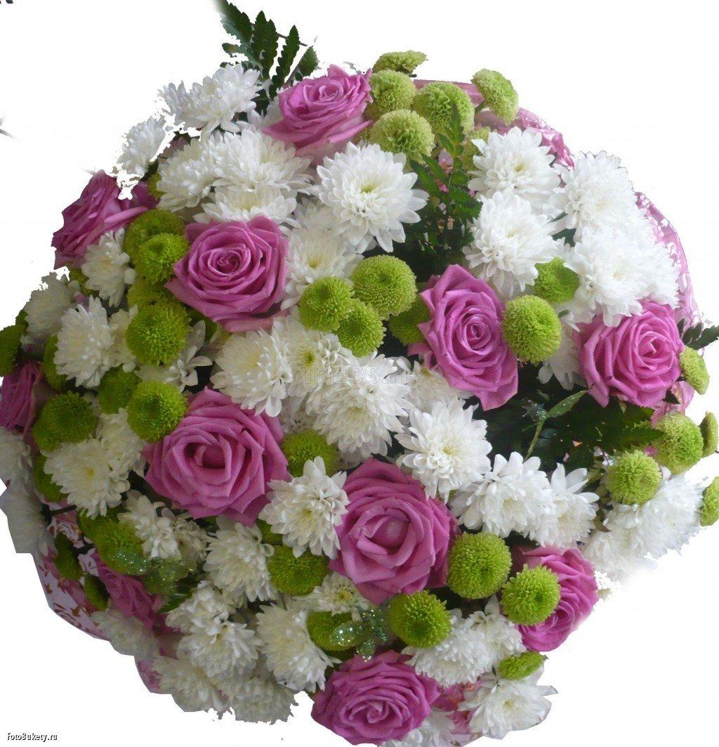 Картинка с хризантемами с днем рождения, днем рождения