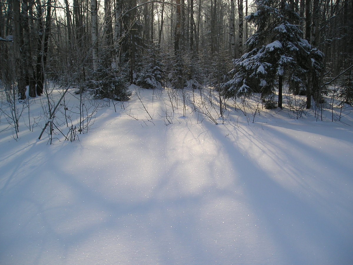 картинка зимней лесной поляны купить монитор схожими
