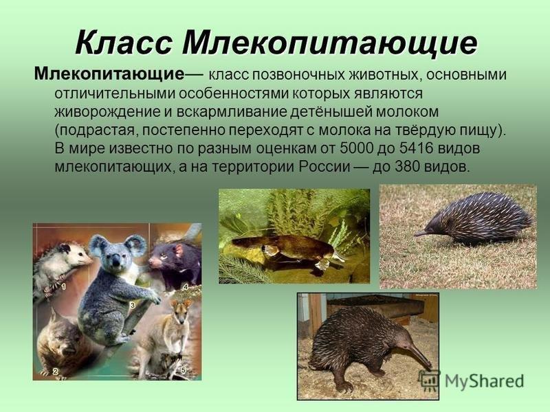 Рассказ в картинках о млекопитающих