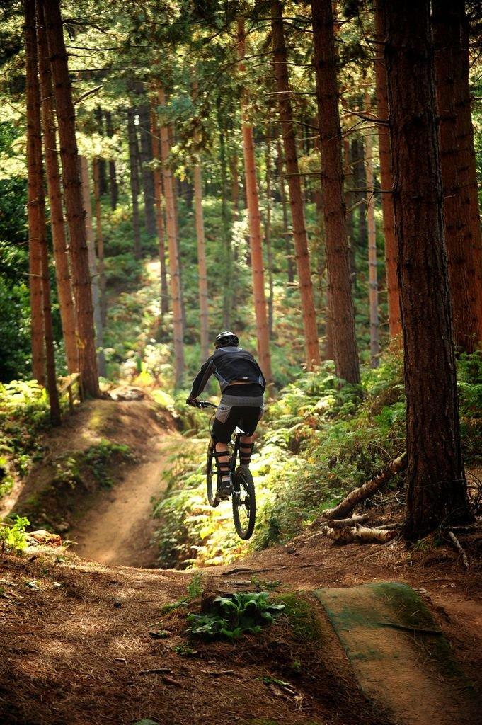 картинки велосипедиста в лесу мечтает стать