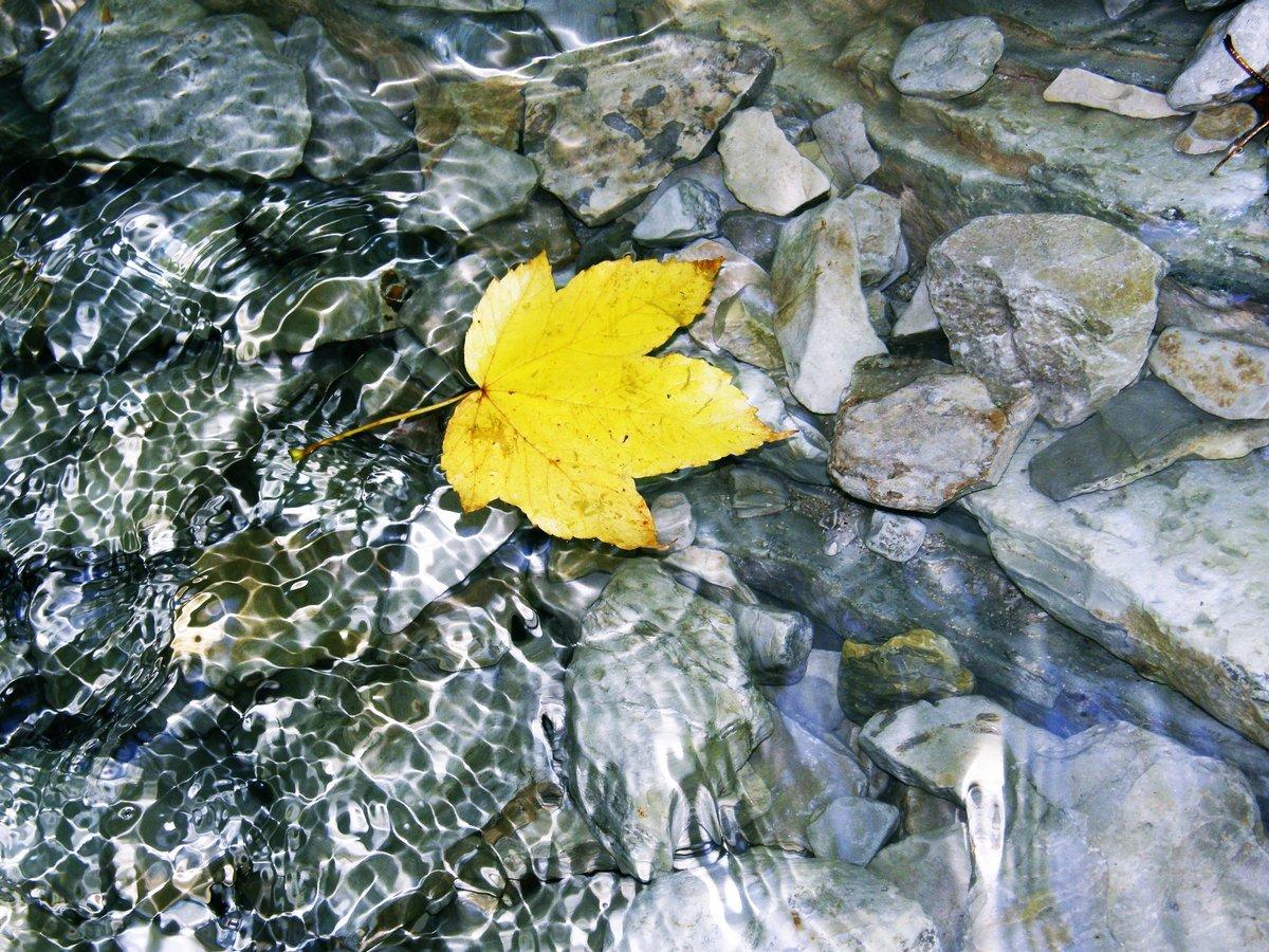 лист вода