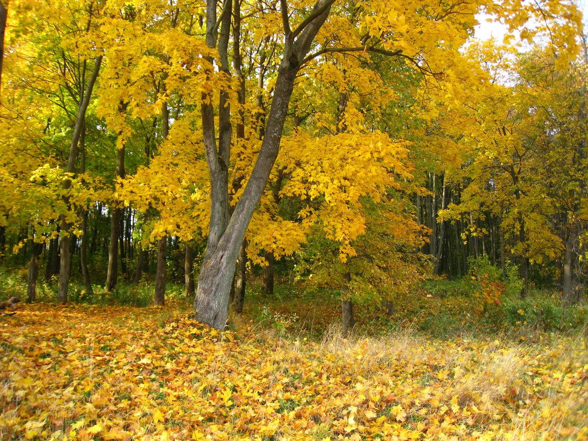 Картинки золотая осень в лесу