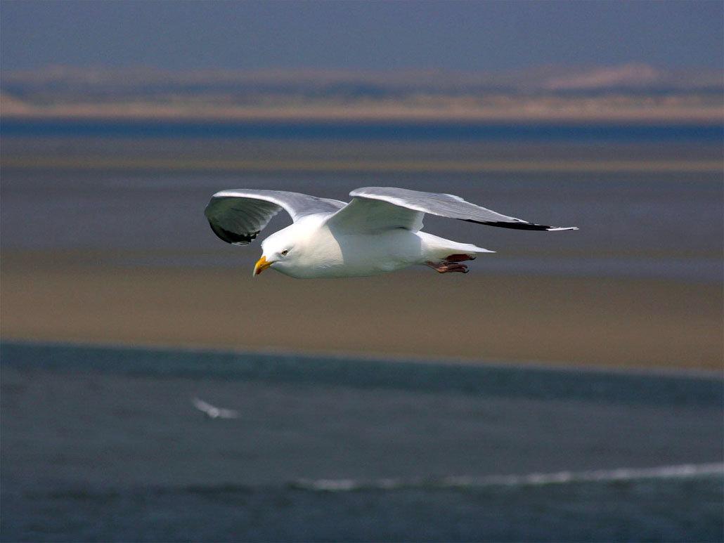 фото летящих чаек над морем