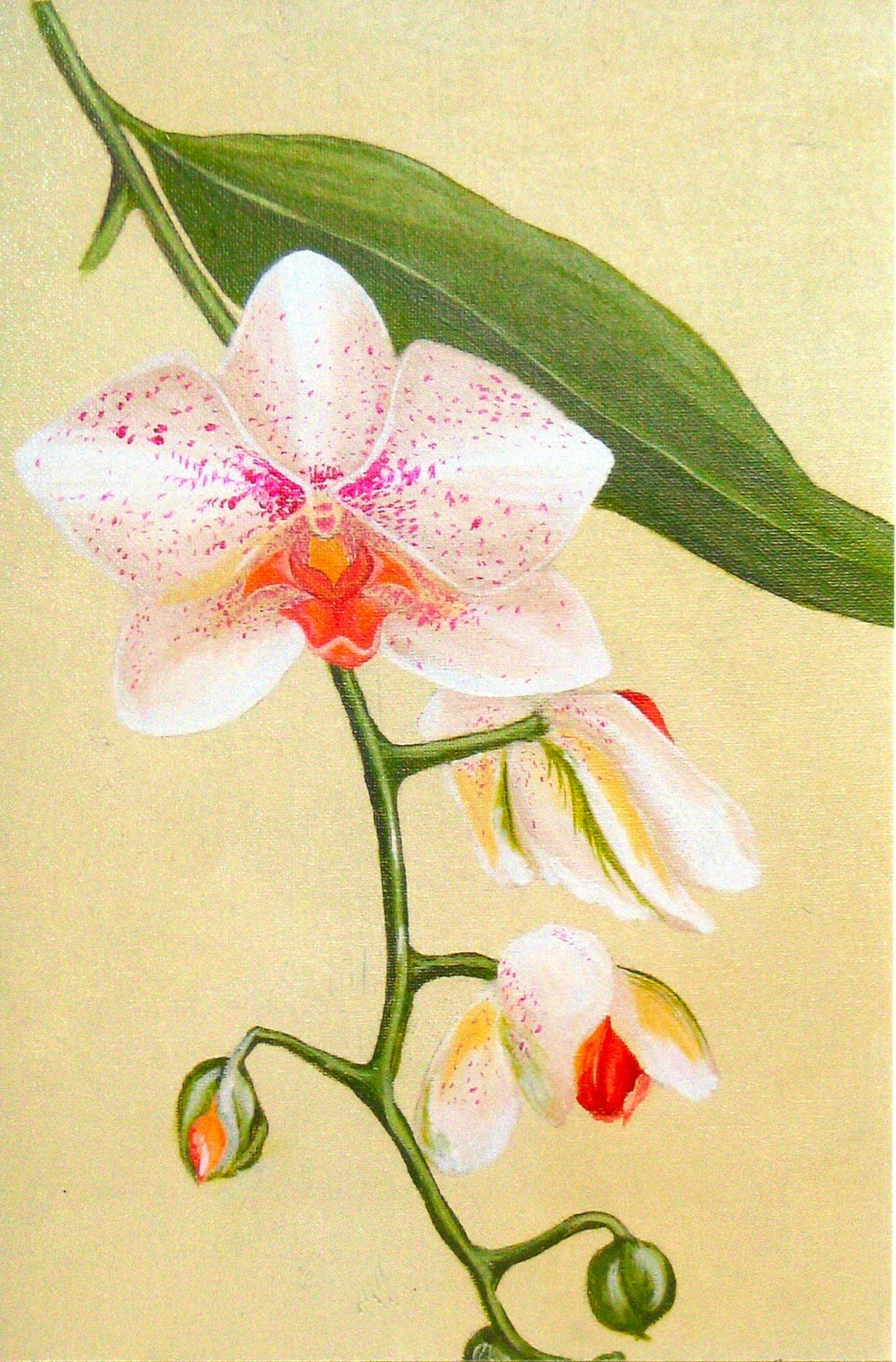 дело, орхидеи картинки на бумаге представляет собой комплекс