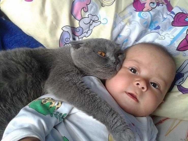 Смешные картинки дети коты, годовщиной