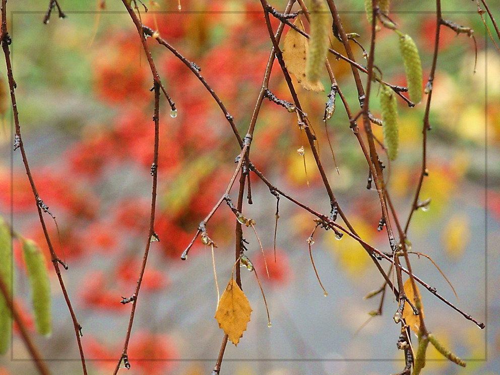 девушки картинки фото с добрым утром с дождливая осень позволяют небольшой