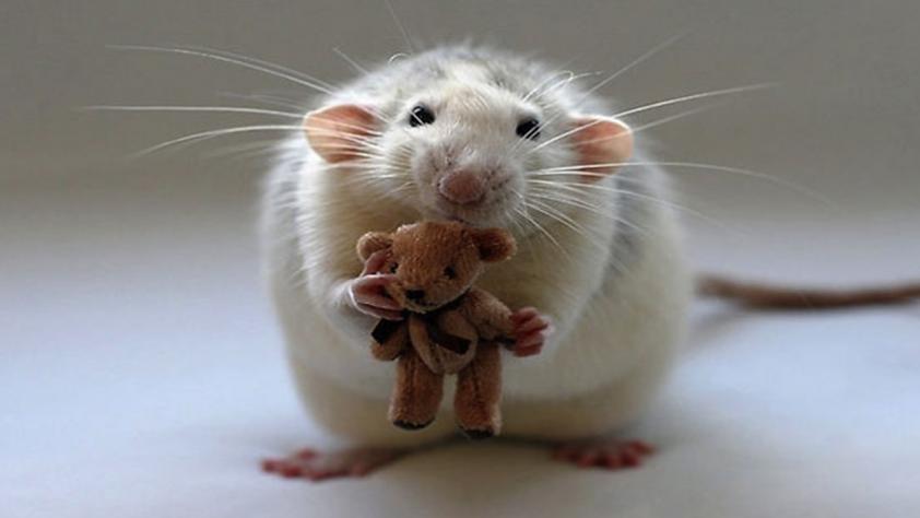 Картинки мышек красивые, картинки надписью