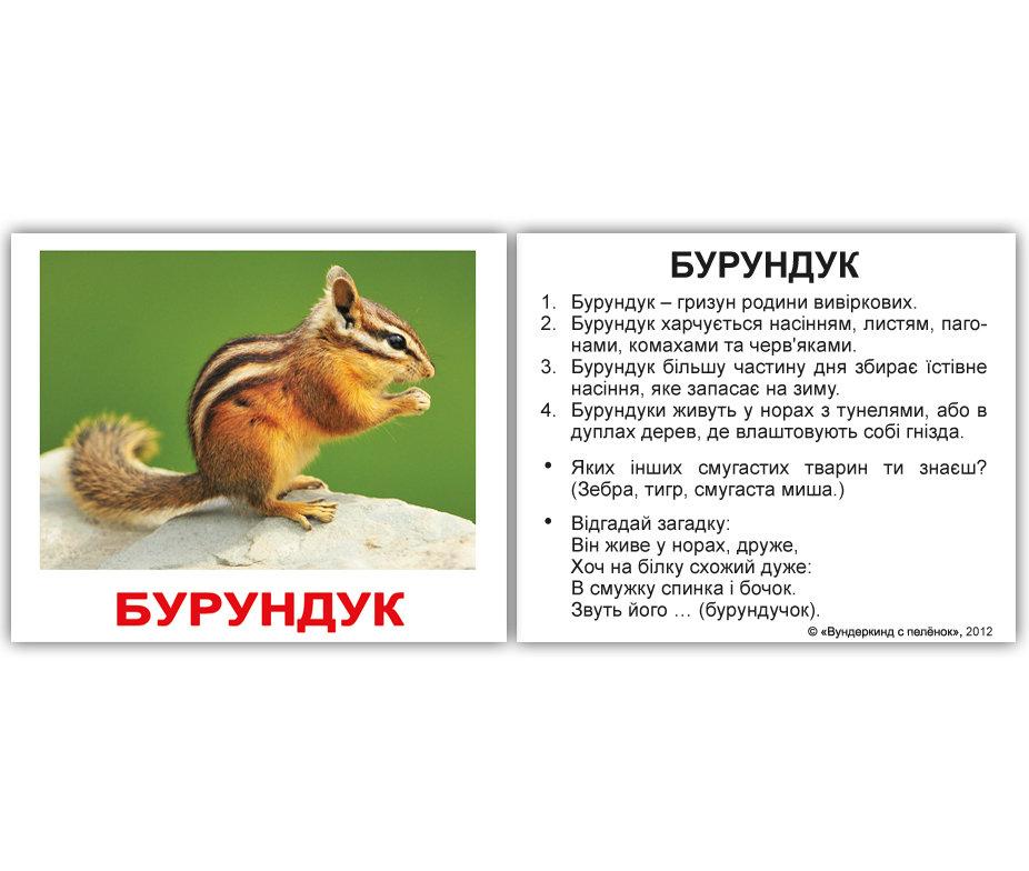 Дикие животные картинки описание