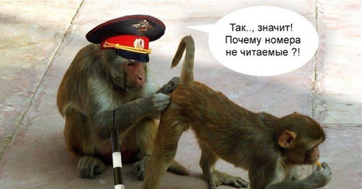 прикольные картинки обезьянки с надписью информации компании