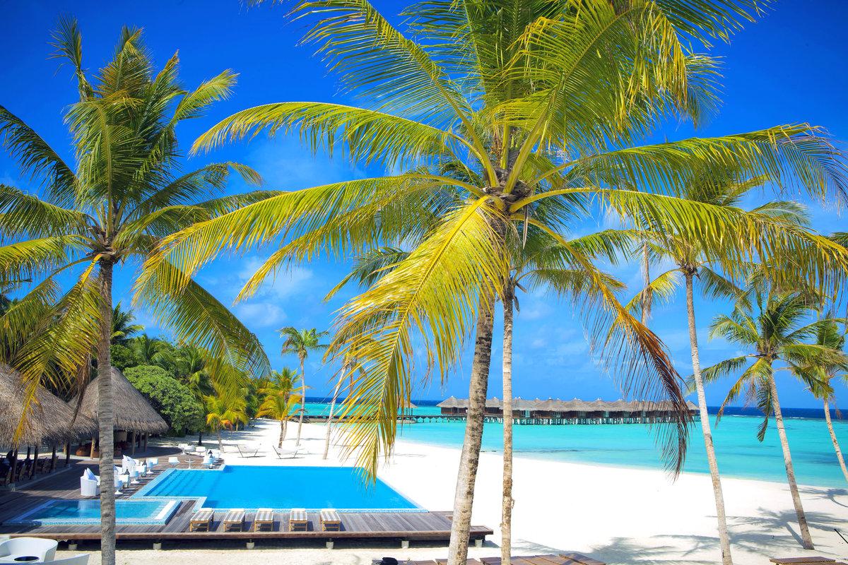 Пальма на пляже картинки