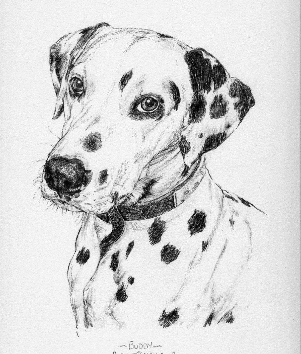 Марта своими, нарисованные картинки собак карандашом