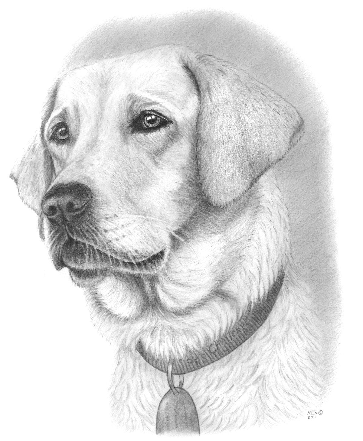 рисунки карандашом не сложные но красивые собаки оригинальной версии квеста